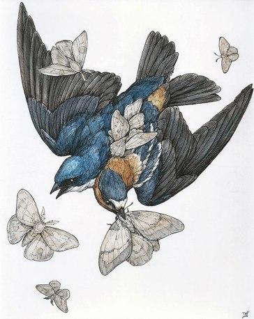 Lauren-Marx-Swallows